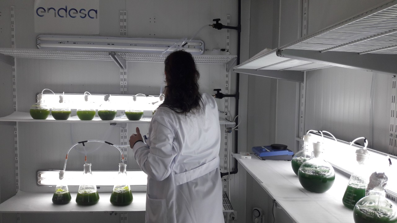 Image of a scientist in the laboratory doing an experiment with microalgae