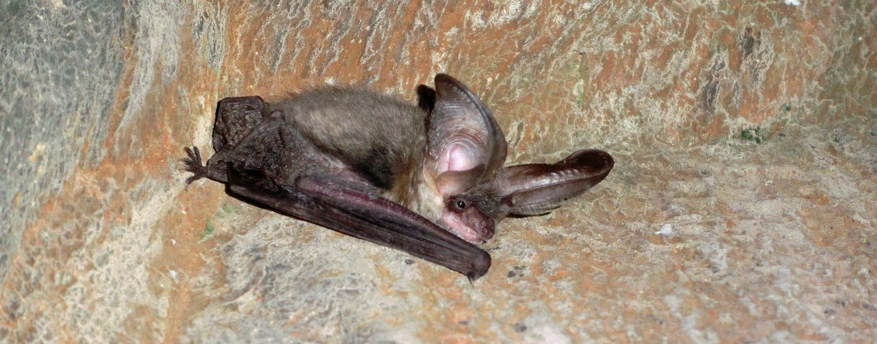 Image of a bat